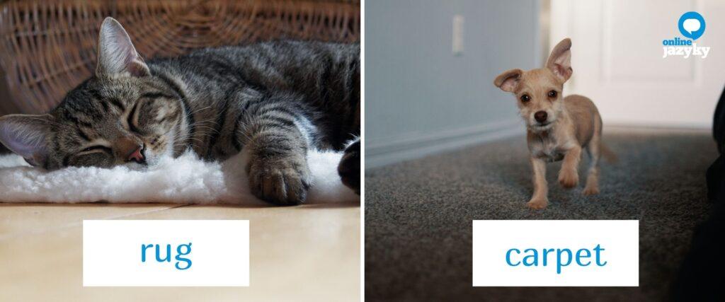 Učte se doma anglicky s Googlem: rozdíl mezi rug a carpet